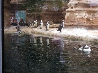 Sedgwick County Zoo - Cessna Penguin Cove