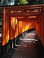 Sembon-Torii in Fushimi Inari Grand Shrine 12.jpg