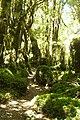 Sendera Bosque Encantado (3184588915).jpg