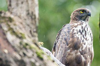 Serpant-Eagle.jpg