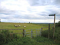 Sheep on the footpath, Maulden, Beds - geograph.org.uk - 190380.jpg