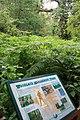 Sherwood Forest Information Board - geograph.org.uk - 890684.jpg
