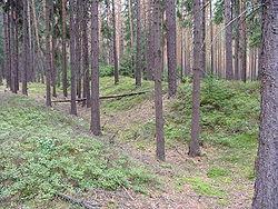 Wały Śląskie (fot. Wikipedia - Maciej Boryna, lic.C.C.3,0)