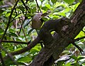 Singapore Botanic Gardens (4042377241).jpg