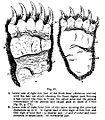 Slothbear paws.jpg