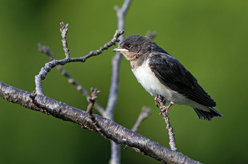 File:Small bird perching on a branch.jpg