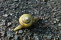 Snail Medford MA.JPG