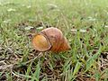 Snail Shell.jpg