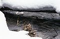 Snow Covered Creek - panoramio - A J Butler (1).jpg