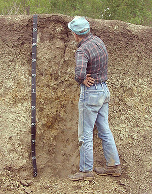 Soil science - A sylviculturist, at work