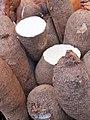Solanales - Ipomoea batatas - 3.jpg