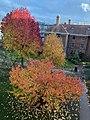 Somerville College Oxford, autumn, from Park.jpg