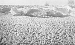 South - the story of Shackleton's last expedition, 1914-1917 - Ice Flowers.jpg