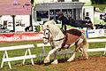 Spectacle équestre Bernard Quental Sofie Agnoux Nathalie Barot Mondial du percheron 2011 CL J Weber02 (23715558879).jpg