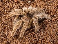 Aslında tüylü bir canlı olmasına rağmen pek sevilmediği için böcek kategorisine itelenmiştir.