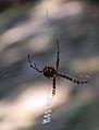 Spider b2.jpg