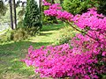 Spring at Bedgebury Pinetum - geograph.org.uk - 796124.jpg