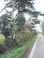 Spring blossom in Ham Lane - geograph.org.uk - 1777790.jpg