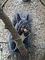 Squirrel likes his nut (23810998919).jpg