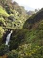 Starr-140222-0458-Clidemia hirta-habitat view waterfall and bridge-Hana Hwy-Maui (25240888055).jpg