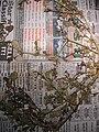 Starr 050326-5297 Trianthema portulacastrum.jpg