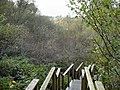Steps to the valley in Ness Wood. - geograph.org.uk - 610472.jpg