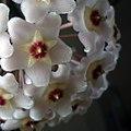 Strange flower (6247028035).jpg