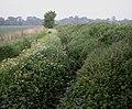 Stream through farmland - geograph.org.uk - 817184.jpg