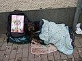 Street vendor's dog - geograph.org.uk - 1051446.jpg