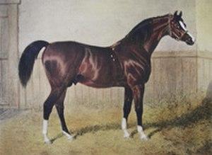 Byerley Turk - Sultan