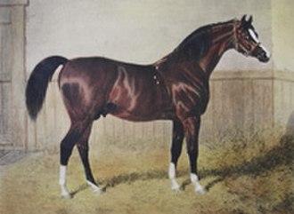 Sultan (horse) - Image: Sultan (GB)