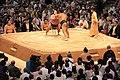 Sumo tournament (15527624289).jpg
