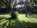 Sunny noon, ramna park.jpg