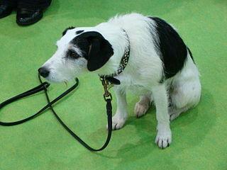 Sykes (dog)