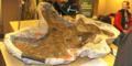 TCMI Triceratops restoration.tif
