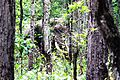 THE CAMOUFLAGED- A male Elephant at Jaldapara Wildlife Sanctuary, West Bengal.jpg