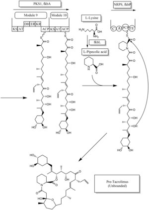 Tacrolimus biosynthesis part 2.tif