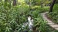 Taipei Daan Park - Small Ecological Pool - 20180715 - 01.jpg