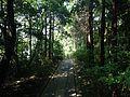 Takamiya Sando of Munakata Grand Shrine (Hetsu Shrine) 5.JPG