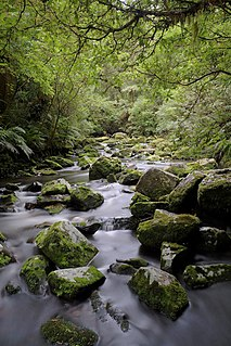 Tautuku River river in New Zealand