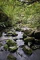 Tautuku River.jpg