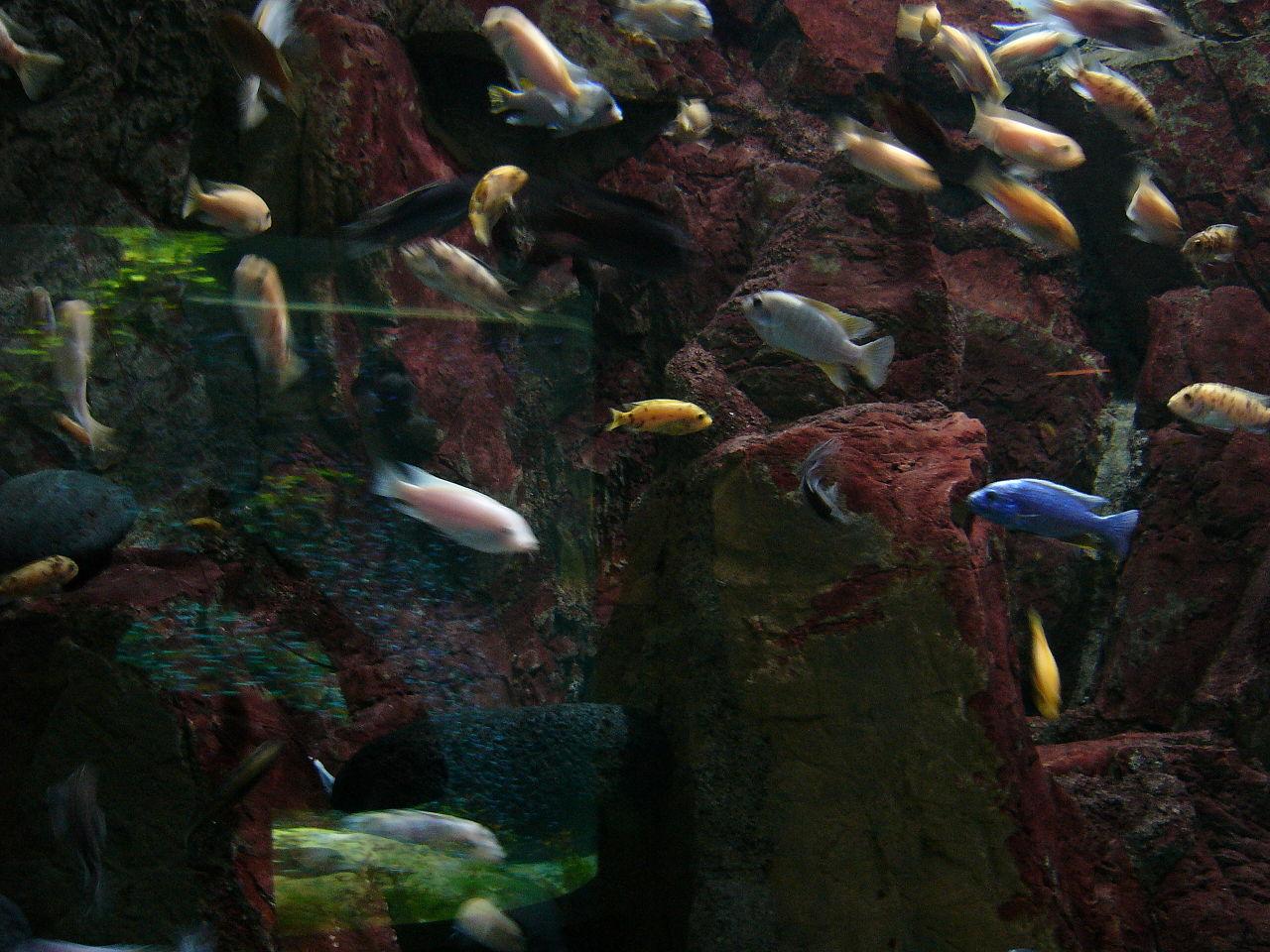 List of freshwater aquarium invertebrate species