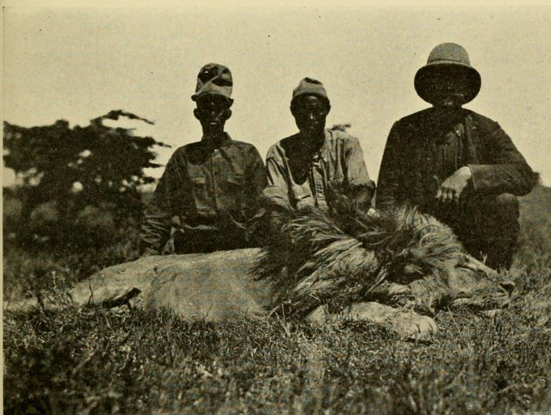The Big Game of Africa (1910) - Male lion Sotik Plains May 1909