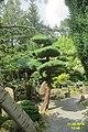 The Japanese garden, Jarków (31328126423).jpg