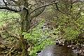 The River Eden - geograph.org.uk - 1271242.jpg