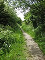 The Trans Pennine Way near Gipsyville - geograph.org.uk - 1326275.jpg