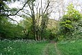 The Tunbridge Wells Circular Walk and High Weald Landscape Trail entering a woodland near Pembury - geograph.org.uk - 1301610.jpg