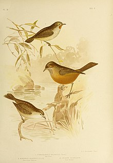 The birds of Australia (16989832911).jpg