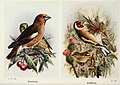 The birds of the British Isles and their eggs (8263769047).jpg