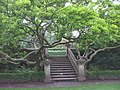 The gardens at Insole Court, Cardiff - geograph.org.uk - 938289.jpg